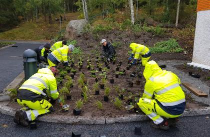 Plantering av perenner på Stena Ekebo - Lövhagen mark och trädgård